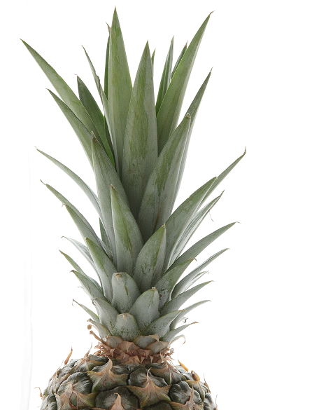 Feuilles ananas